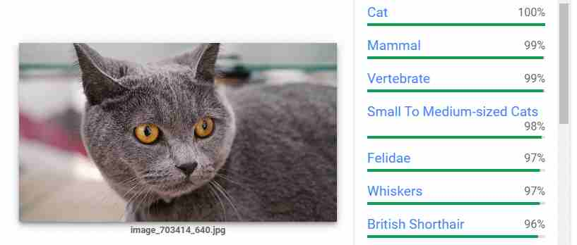 example of the Google cat image algorithm